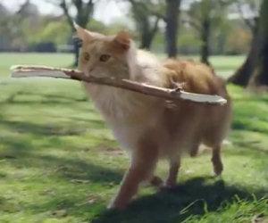 'Sii più cane', pubblicità della O2