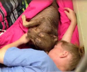 Un cane abbandonato è terrorizzato, ecco cosa fa la volontaria...