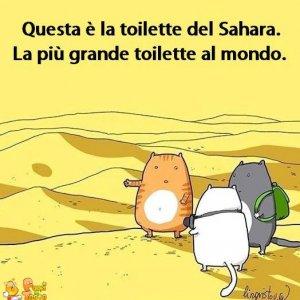 La toilette del Sahara