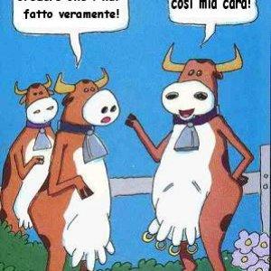 Mucche e piercing