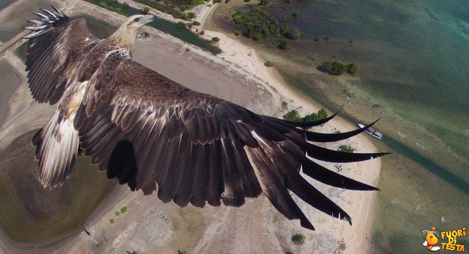 Aquila fotografata da un drone