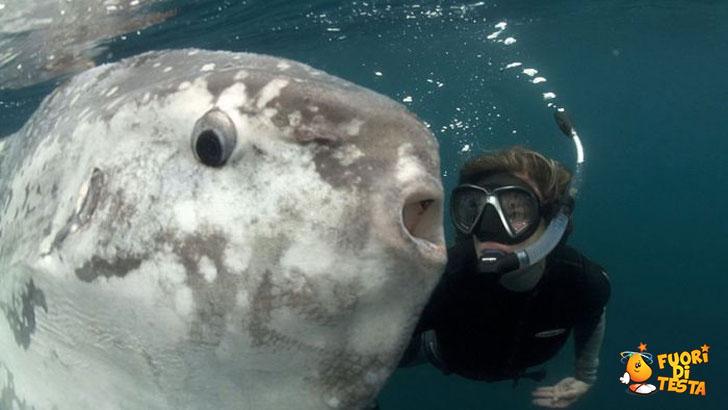 E tu che pesce sei?