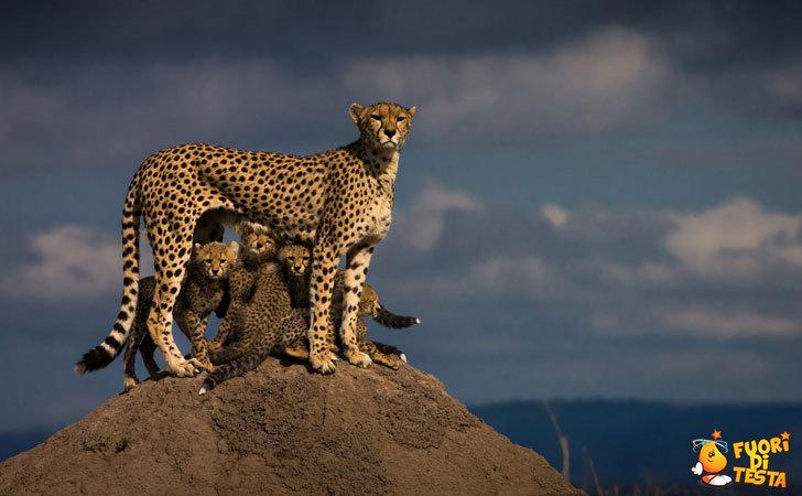 Mamma protegge i suoi cuccioli