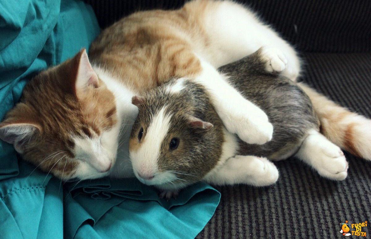 Strane amicizie
