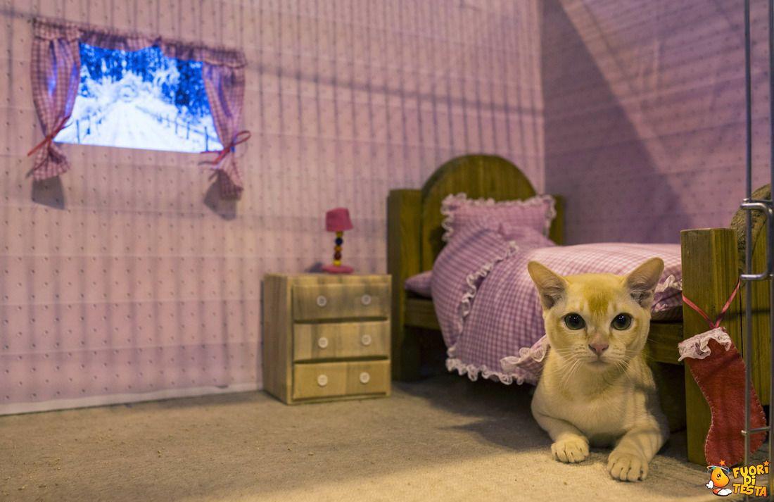 La cameretta del gatto