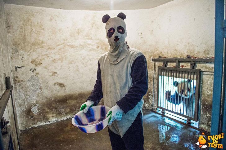 Dare da mangiare ai panda
