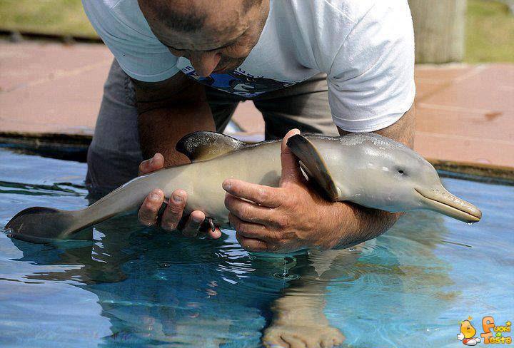 Un delfino appena nato