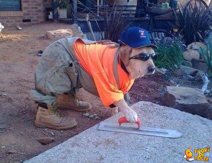 Il cane muratore