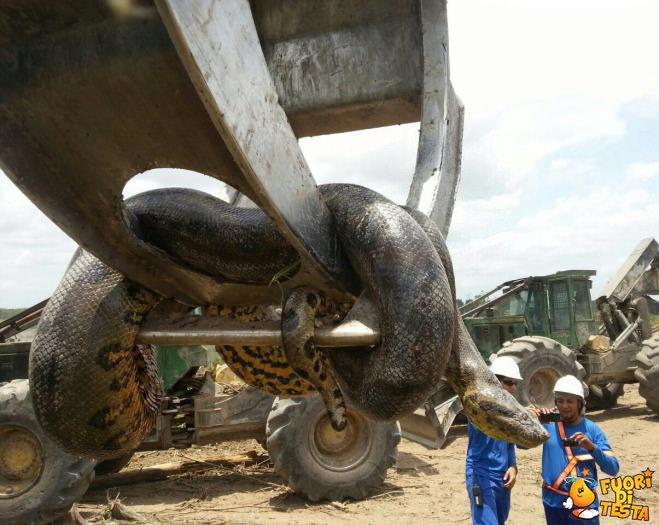 Serpente gigante in Brasile