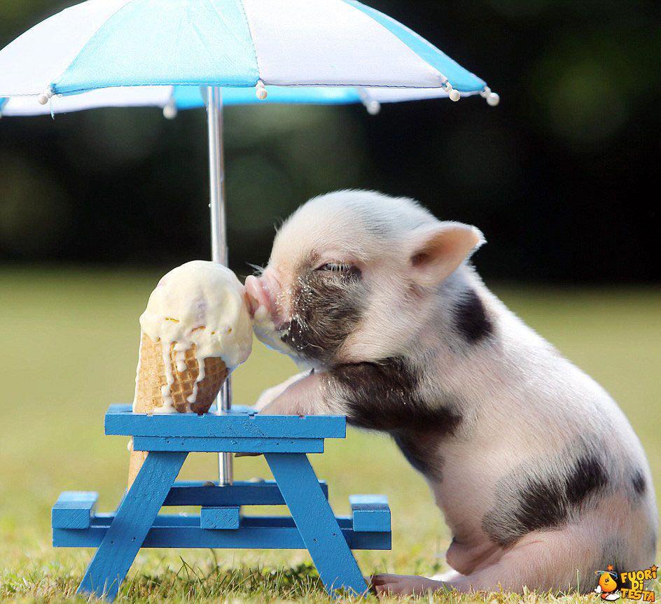 Adesso un bel gelato!