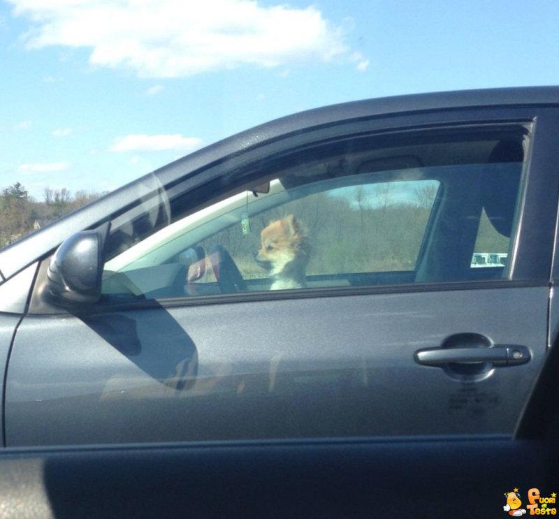 Uno strano automobilista