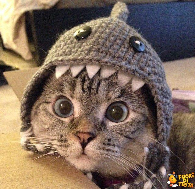 Gattino con un delizioso cappellino