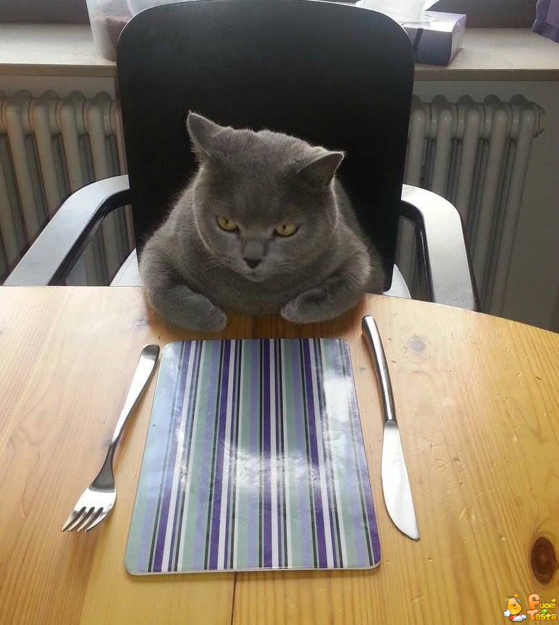 Dove sono le mie lasagne?