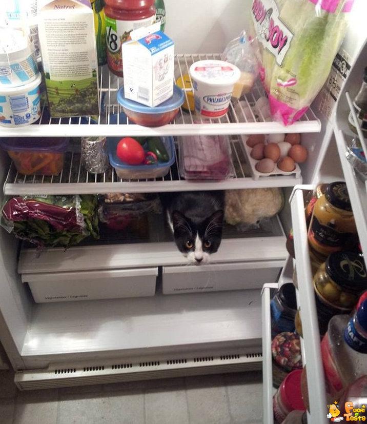 Dove è il mio cibo?