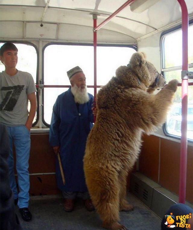 Orso usa i mezzi pubblici