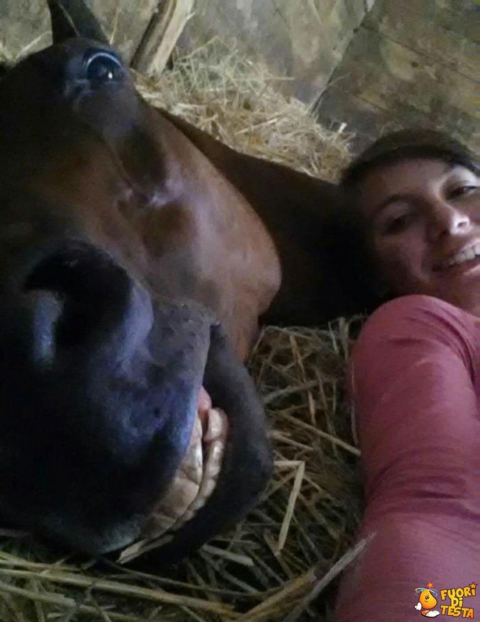 Anche i cavalli amano i selfie