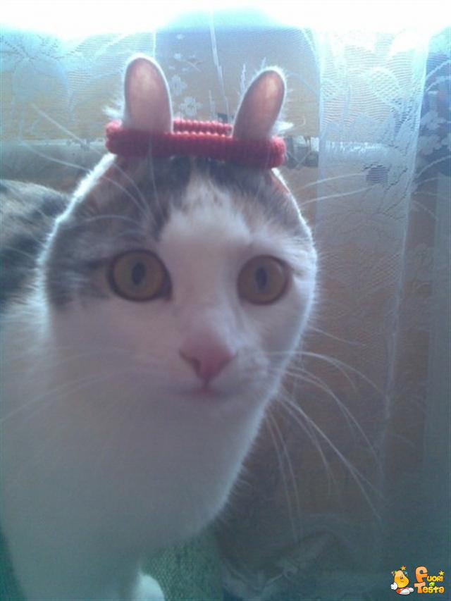 Elastico per gatti