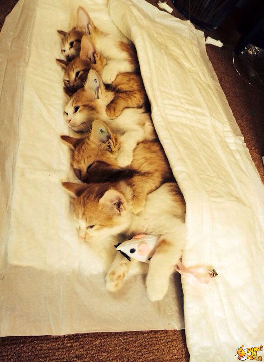 Buona notte a tutti