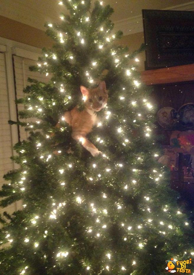 Un nuovo addobbo natalizio