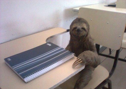 Adesso si inizia a studiare