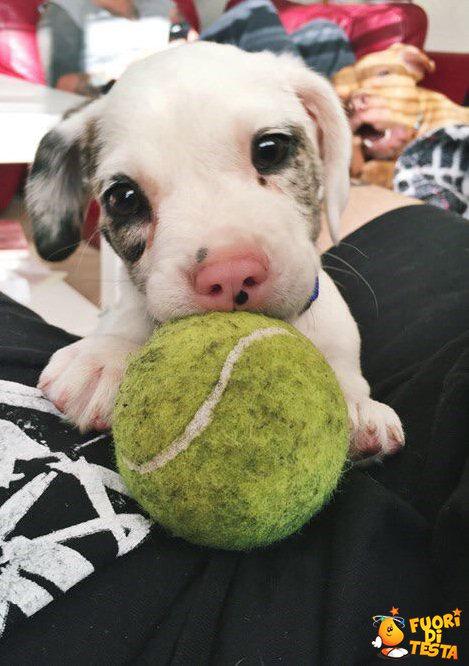 Adesso vuoi giocare con me?