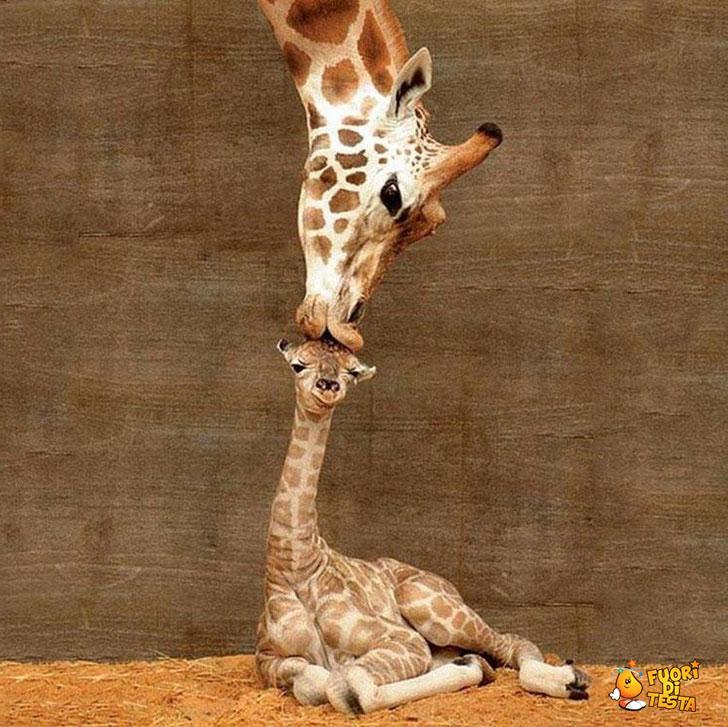 L'amore di una madre