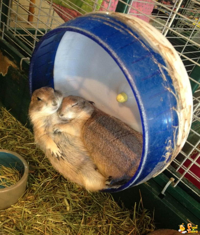 Amore, dormiamo insieme!