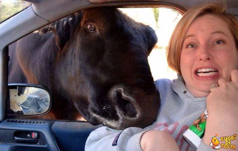 Anche lei vuole un bel selfie