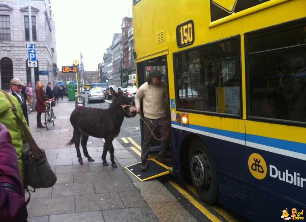 Asino sull'autobus