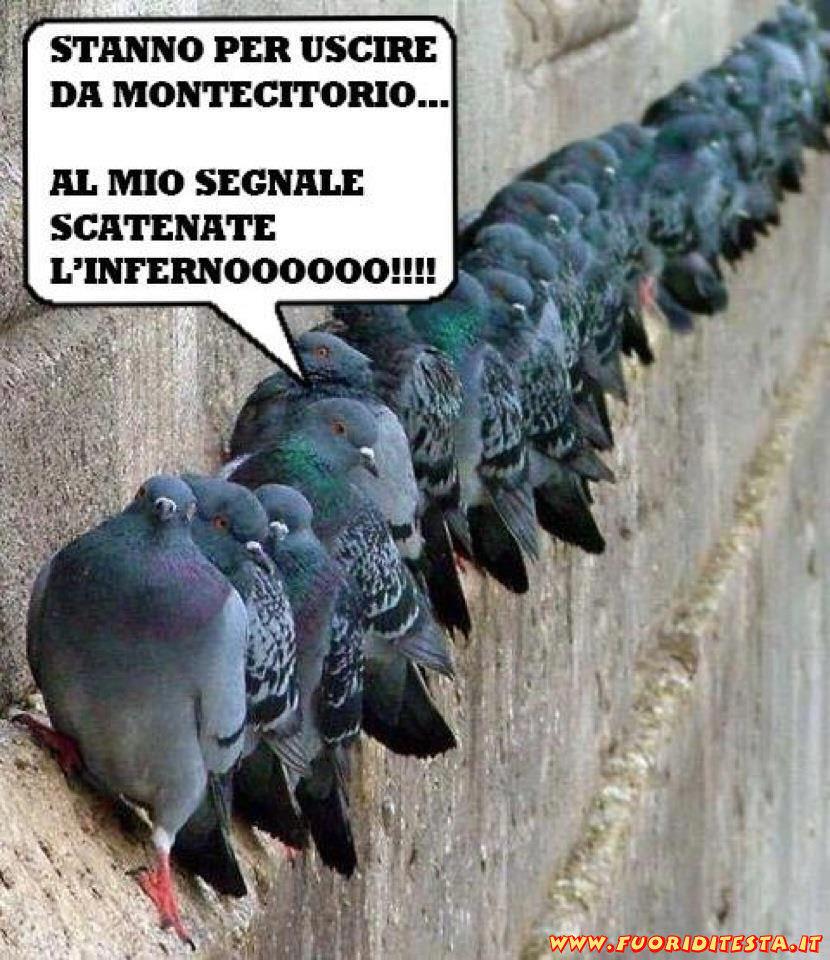 Attentato dei piccioni