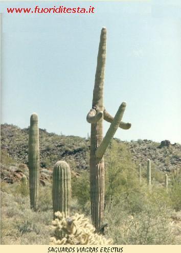 Cactus Immagini Divertenti