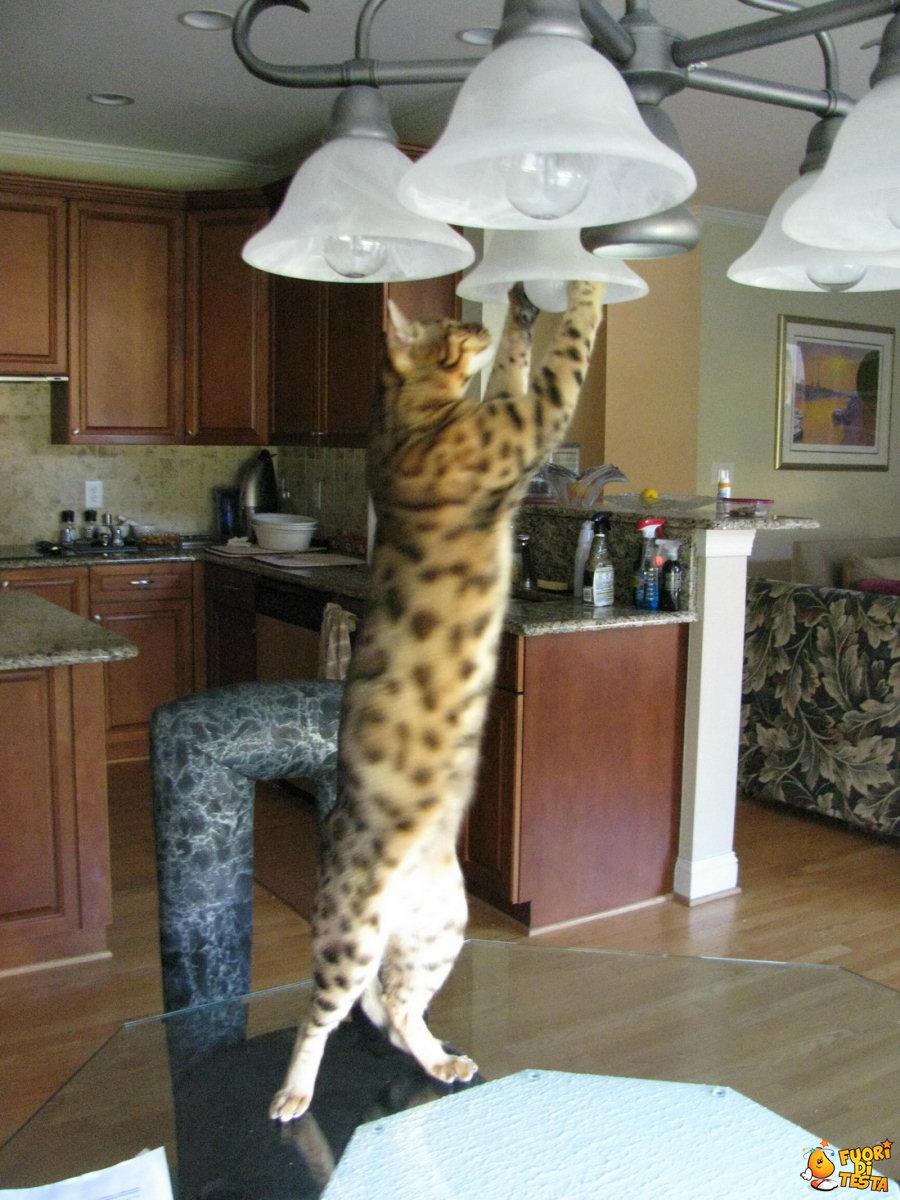 Cambiare una lampadina