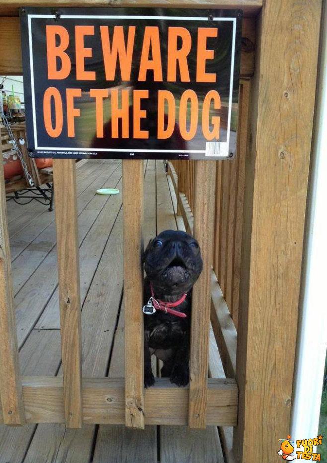 Cane molto cattivo