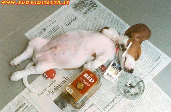 Cane sbronzo
