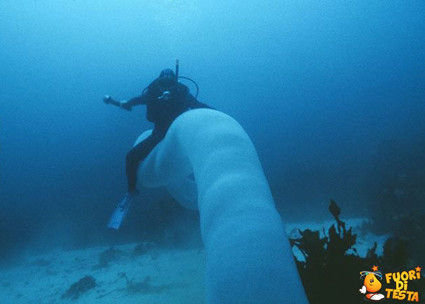 Cavalcare un enorme verme di mare
