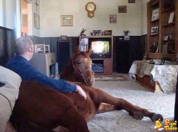 Cavallo domestico in salotto