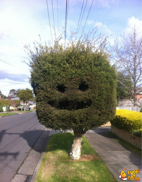 Che albero simpatico!