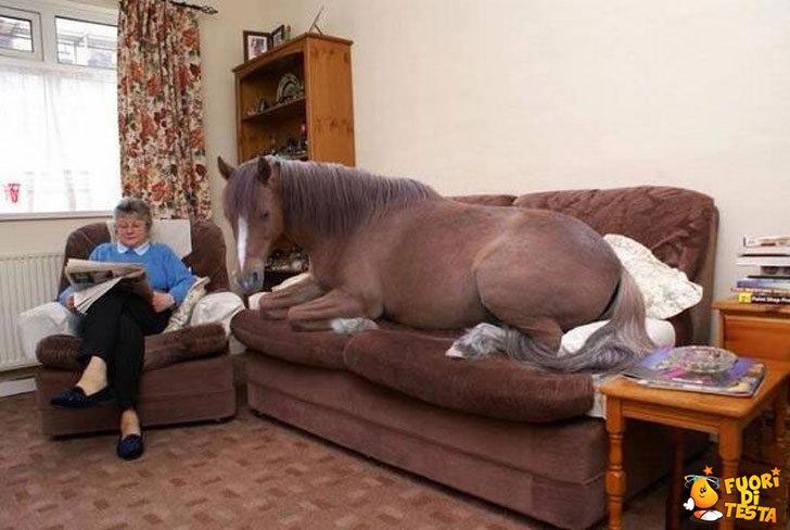 Che bello rilassarsi sul divano