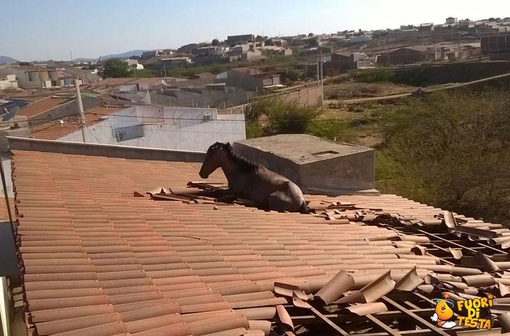 Che ci fa un cavallo lì?