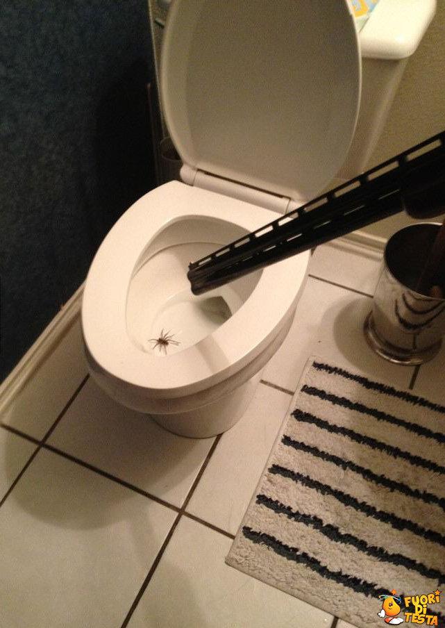 Come combattere i ragni