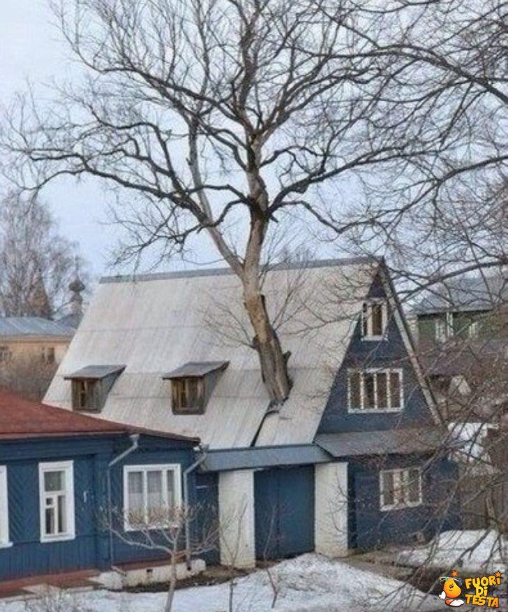Condividere la casa con un albero