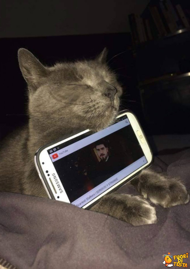 Dare un compito al gatto