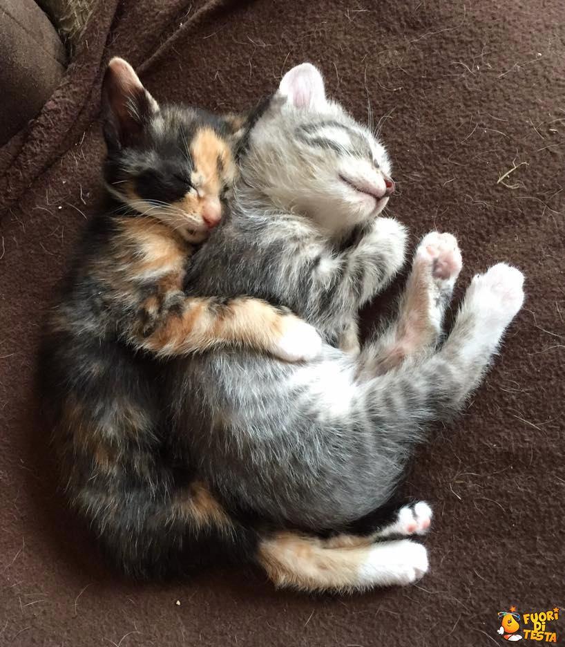Dormire in modo dolcissimo
