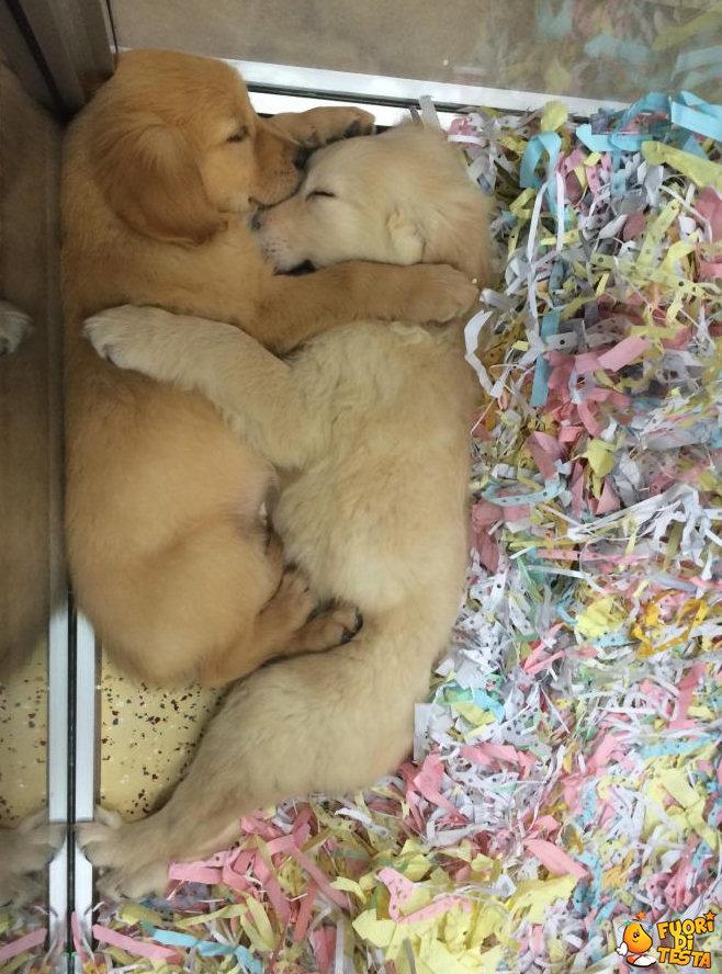 Due cuccioli abbracciati