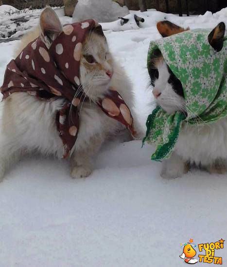 Due gatte in Russia