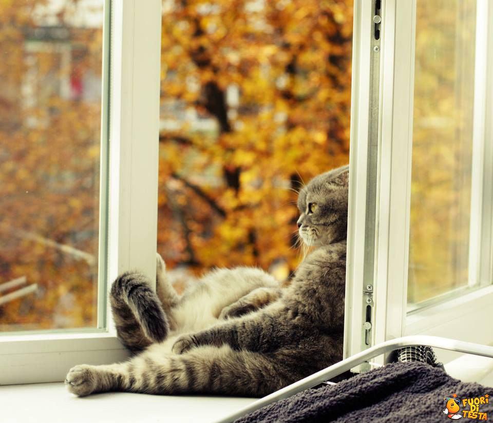 Dura la vita di un gatto