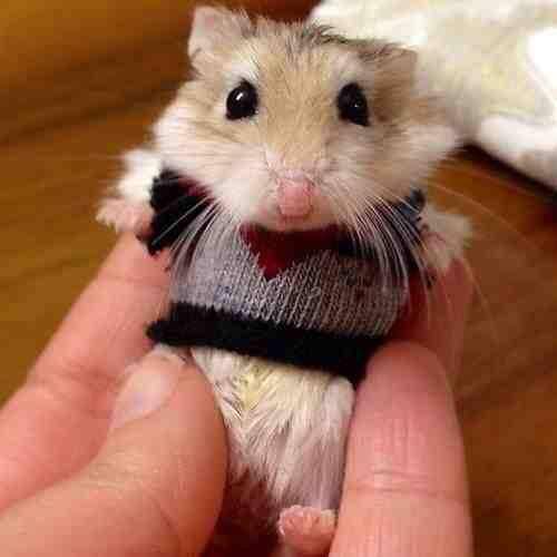 Ecco il nuovo maglioncino