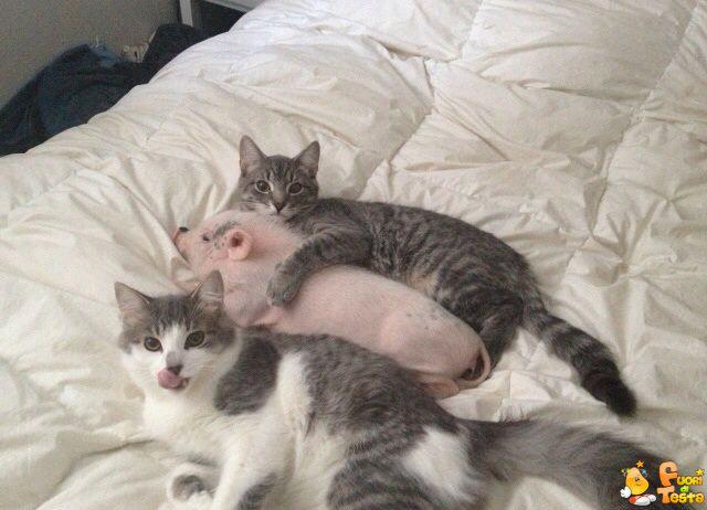 Famiglia allargata