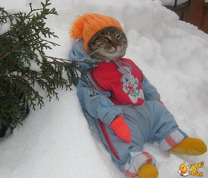Il famoso gatto delle nevi