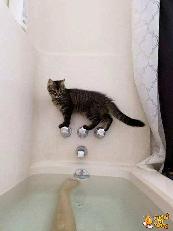 Il gatto equilibrista